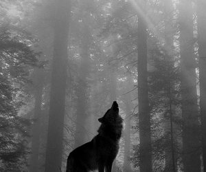 howling image