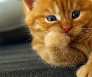 adorable and cat image