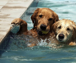 dog, cute, and water image