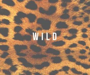 wild, animal, and leopard image
