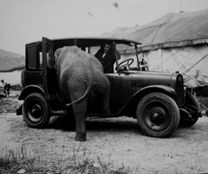 elephant, car, and funny image