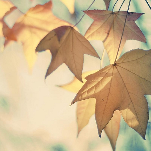 autumn, leaves, and translucent image