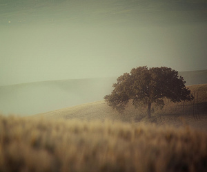 tree, nature, and landscape image