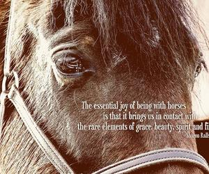 horse, photo, and quote image