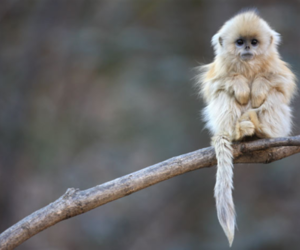 monkey, nature, and cute image