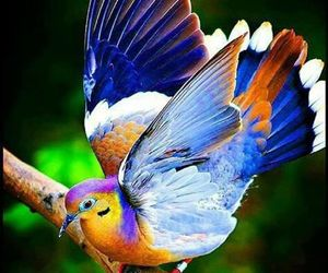 bird and multi-color. image