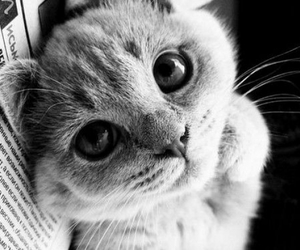 animal, lovely, and cat image