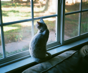 cat, nature, and photography image