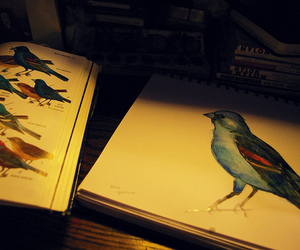 bird, draw, and painting image