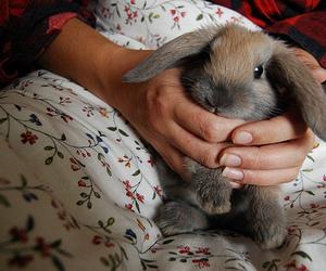 aww, quality, and bunny image