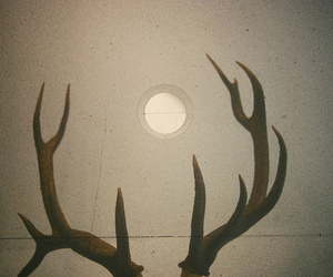 antlers and photography image