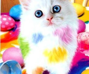 cat, kitten, and colorful image