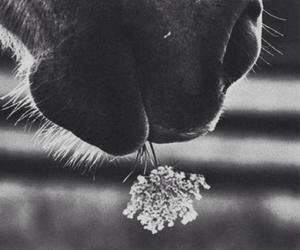 horse, flower, and black and white image