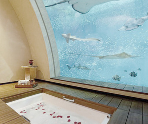 bathroom, aquarium, and bathtub image