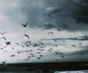 bird, sky, and ocean image
