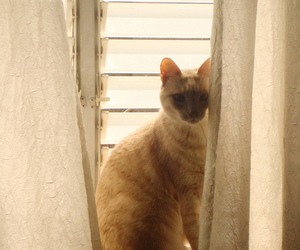 cat, curtains, and light image
