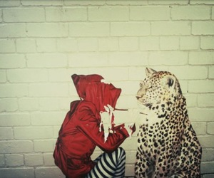 art, photography, and red riding hood image