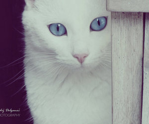 blue, pretty, and cat image