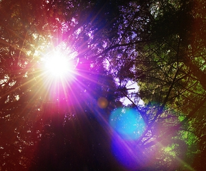 light and trees image