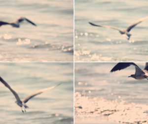 beach, waves, and seagull image