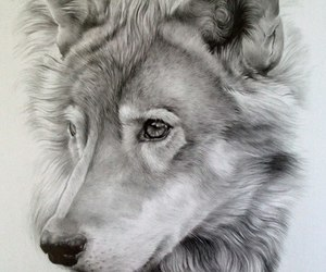 art, draw, and husky image