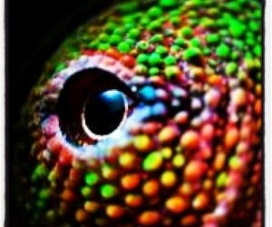 chameleon, neon, and colors image