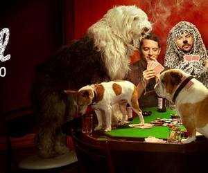 dogs, elijah wood, and poker image
