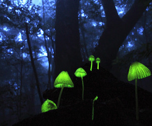 dubtrackfm, mushroom, and green image