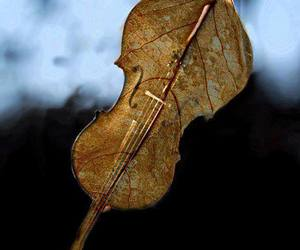 music, violin, and autumn image