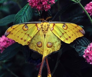 butterfly, nature, and yellow image