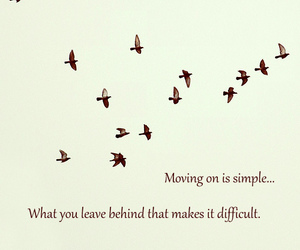 birds, leave, and inspirational image