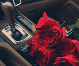 rose, car, and red image