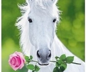 horse, white, and rose image