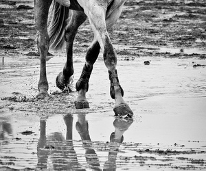 beautiful, black and white, and dressage image