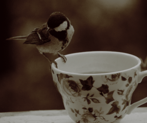 bird and cup image