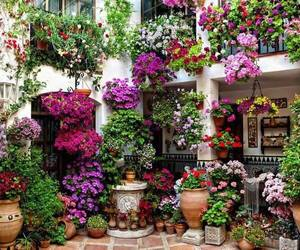 indoor garden and colorful flowers image