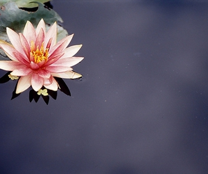 2009, water lily, and f3 image