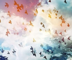birds, colorfull, and sky image