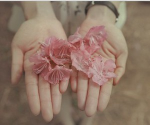 flowers, pink, and hands image