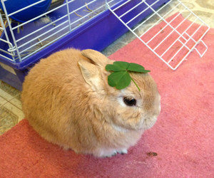 aww, four leaf clover, and funny bunny image