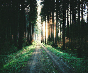 forest, nature, and tree image
