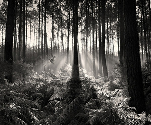 beautiful, black and white, and cool image