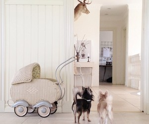 chihuahua, dogs, and interior image