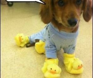 ducks, puppy, and house shoes image