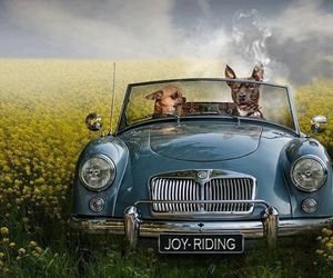 animals, car, and field image