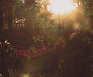 sun, nature, and peace image