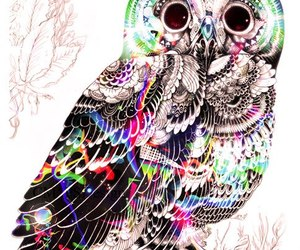 owl, colors, and animal image