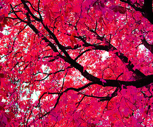 pink, tree, and beautiful image