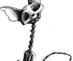 cat, skeleton, and drawing image