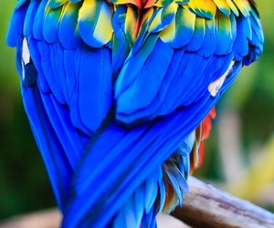 bird, parrot, and heart image